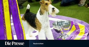 Beastly beautiful: The oldest dog show in the world in New York